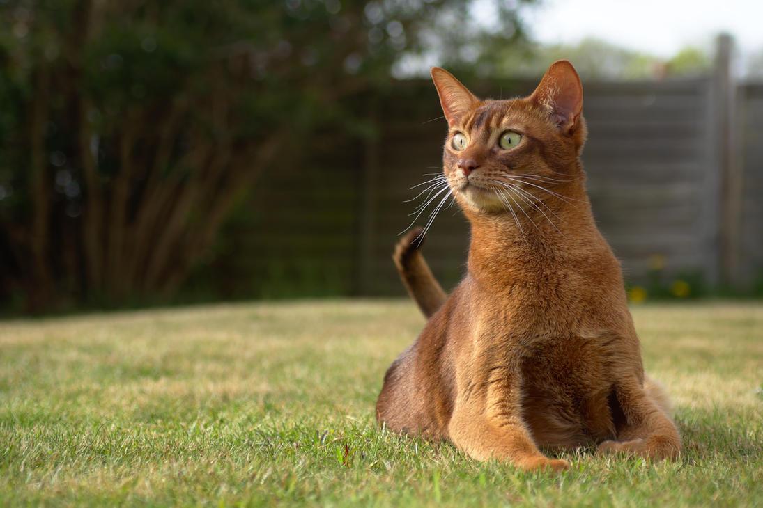 Alert Cat In Garden by FurLined