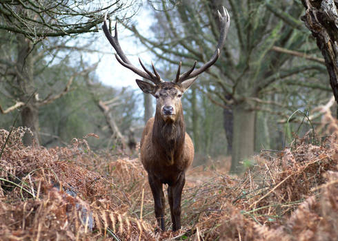 Stag 20170129-3