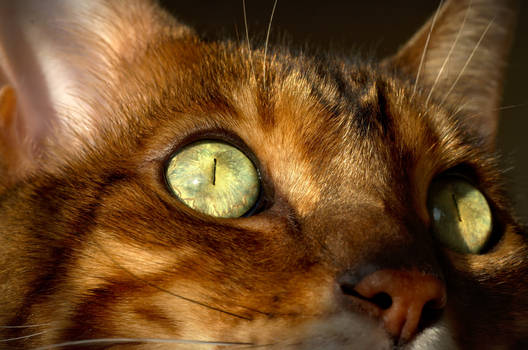 The Eye of the Bengal