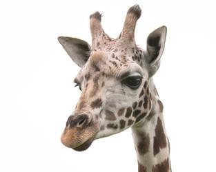 Giraffe 20180604-1 by FurLined
