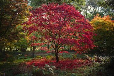 Autumn Reds at Winkworth Arboretum by FurLined