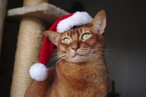 Festive Theo by FurLined