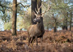 Stag 20190127-1