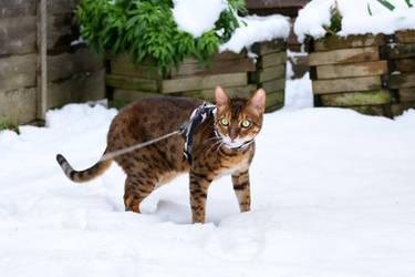 Not A Snow Leopard by FurLined