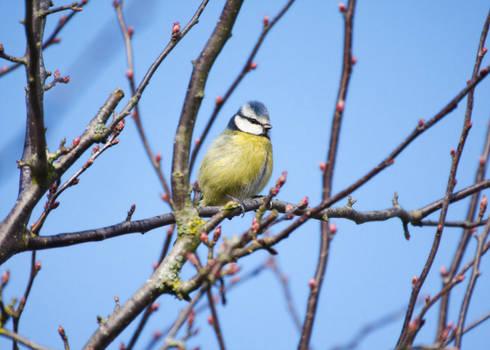 Bird 'n' buds
