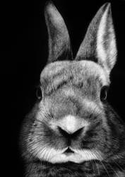 Rabbit - Winsome by edwin-Huang