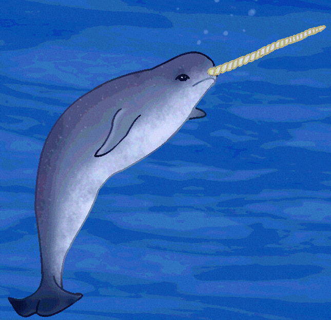 Narwhal Printout- ZoomWhales.com