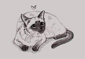 Siamese cat by DamaskRose0503