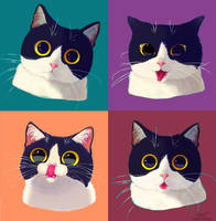 One cat emotions by DamaskRose0503