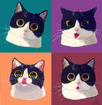 One cat emotions
