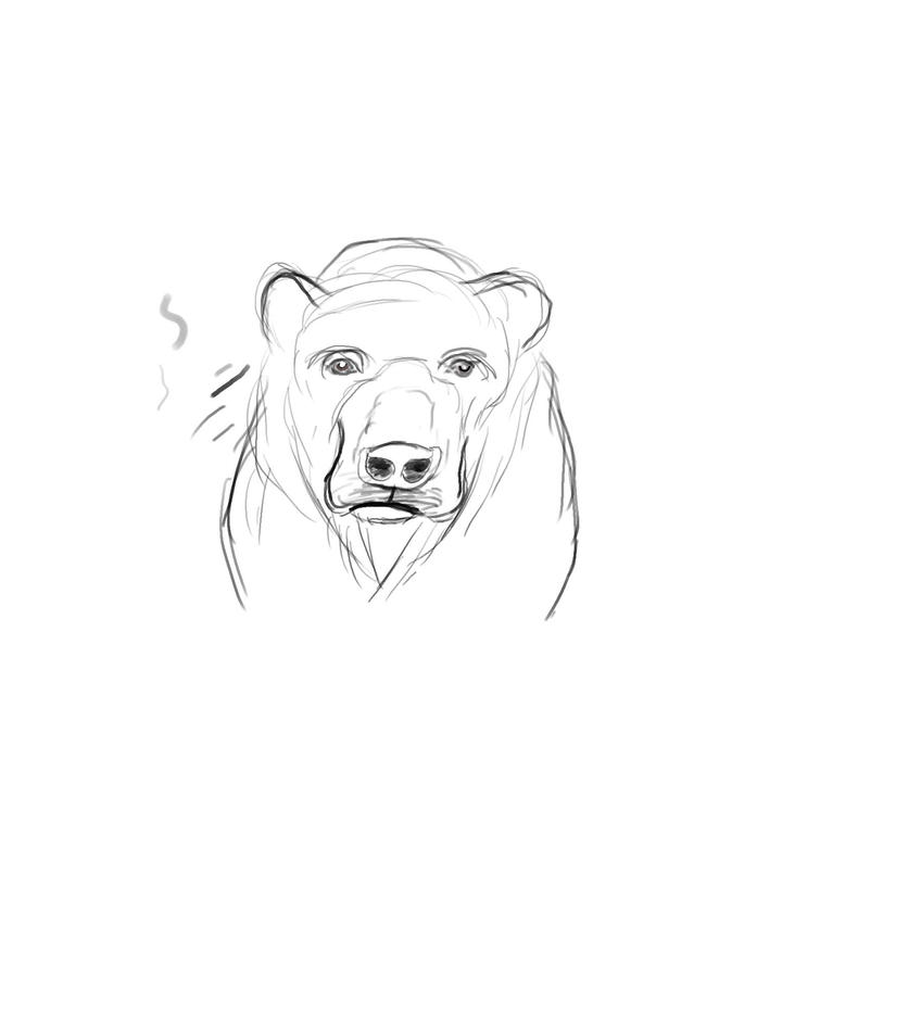 Bear Sketch by OceanOfLife