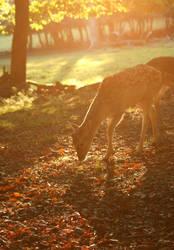 deer by Z740