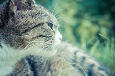 Grey Cat Side View by Trickylady