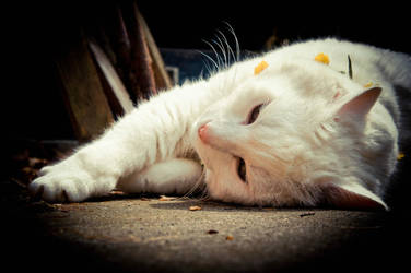 White Cat with Flowers 1 by Trickylady