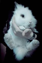 White Lionhead Rabbit by Trickylady
