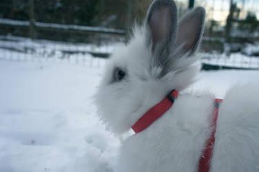 White Rabbit in Snow by Trickylady