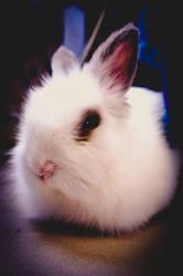 White Rabbit Lights by Trickylady