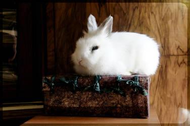 White Rabbit on Box by Trickylady