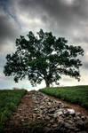 Shawshank Oak Tree