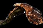 Eagle By Jeinex