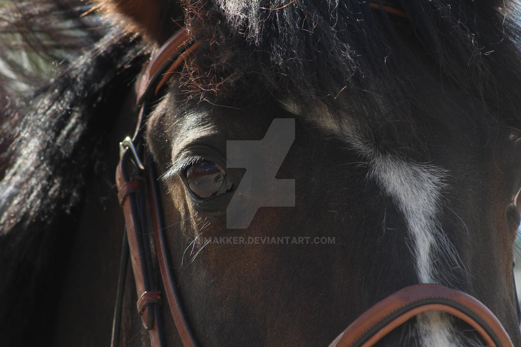 Horse by Limakker