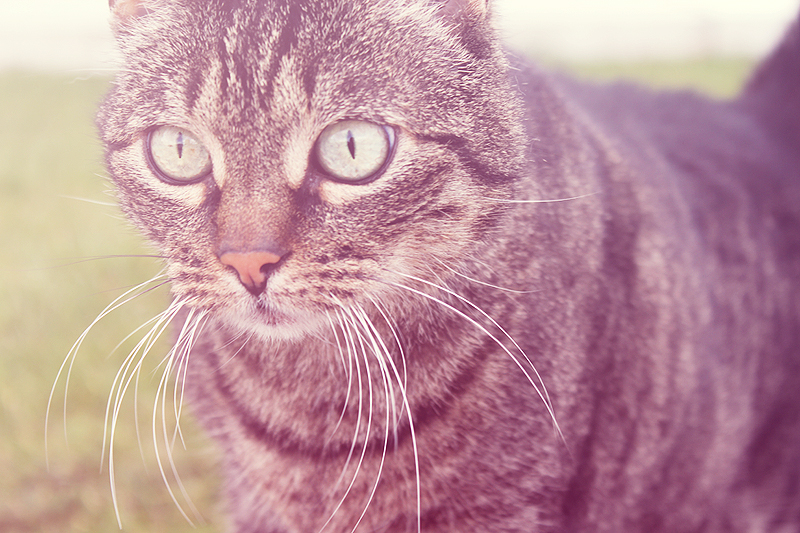 cat by Vylin