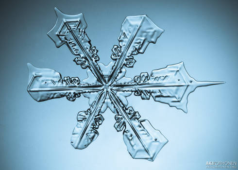 New winter, new snowflakes
