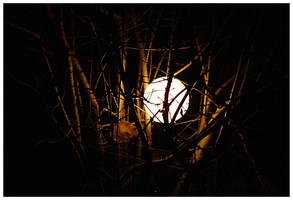 Light ball by ak87