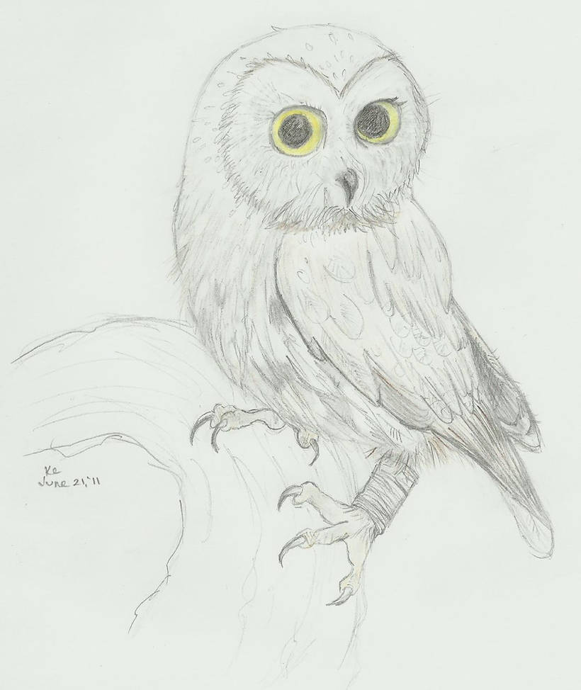 Owl pencil sketch by karanari on deviantart