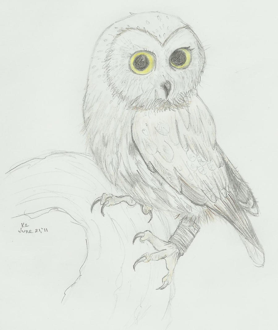 owl pencil sketch by karanari on deviantart