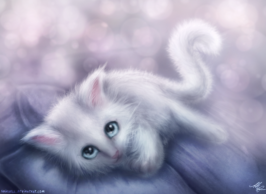 White Kitten by Shirvell