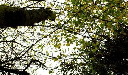 Foliage roof