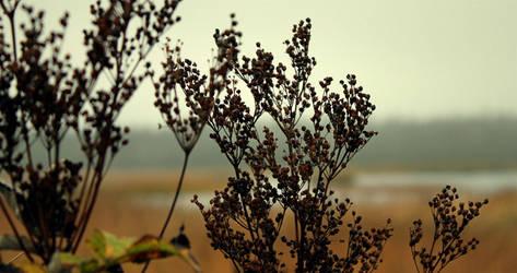 minty misty landscape