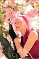 sakura by Kirameku15
