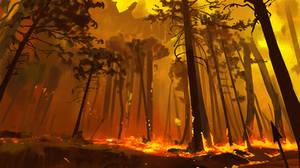 300/365 Field of fire