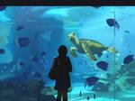 Seaworld by snatti89