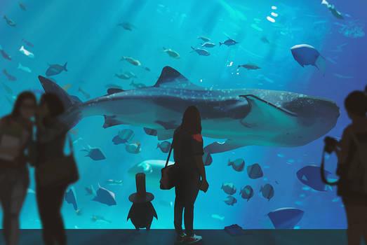 Path of Miranda - Aquarium