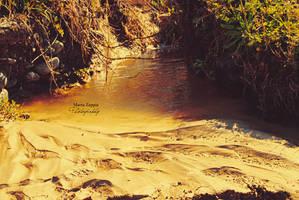 Warm Swamp by MartaLilita