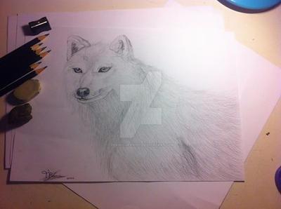 Arctic Wolf Sketch by PlushQueenDIY