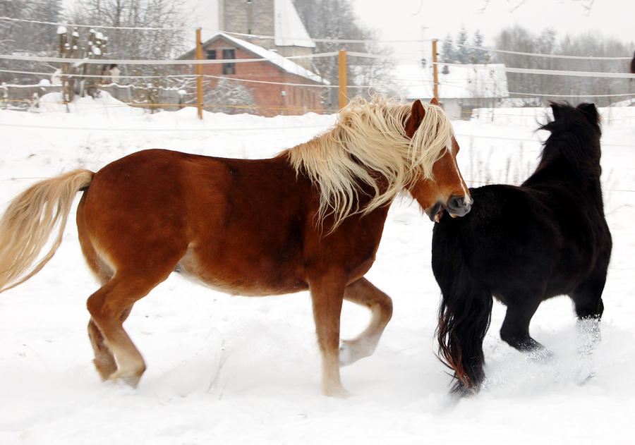 Groundhog Says 6 More Weeks Of Winter, And The Horses Say