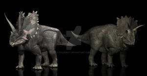Agujaceratops Anchiceratops