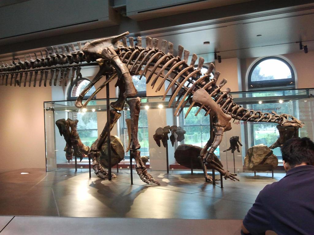 Camptosaurus by PaleoGuy