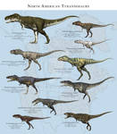 North American Tyrannosaurs
