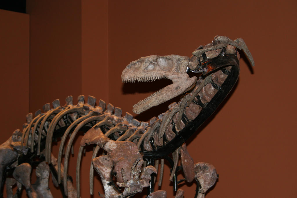 Lufengosaurus (CollectA)   Dinosaur models/toys Wiki ...