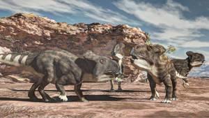 Protoceratops juvenile