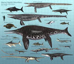 Marine Reptile Miscellany