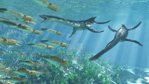 Plesiosaurs and Belemnites2
