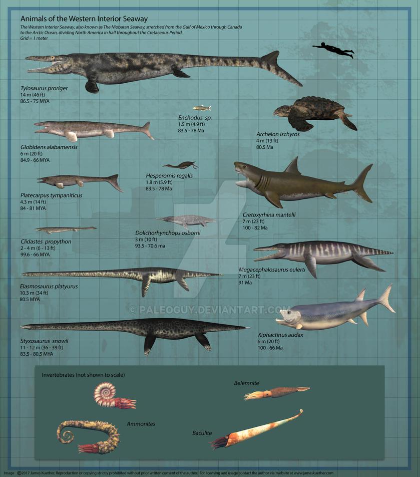 Elegant Animals Of The Western Interior Seaway By PaleoGuy ...