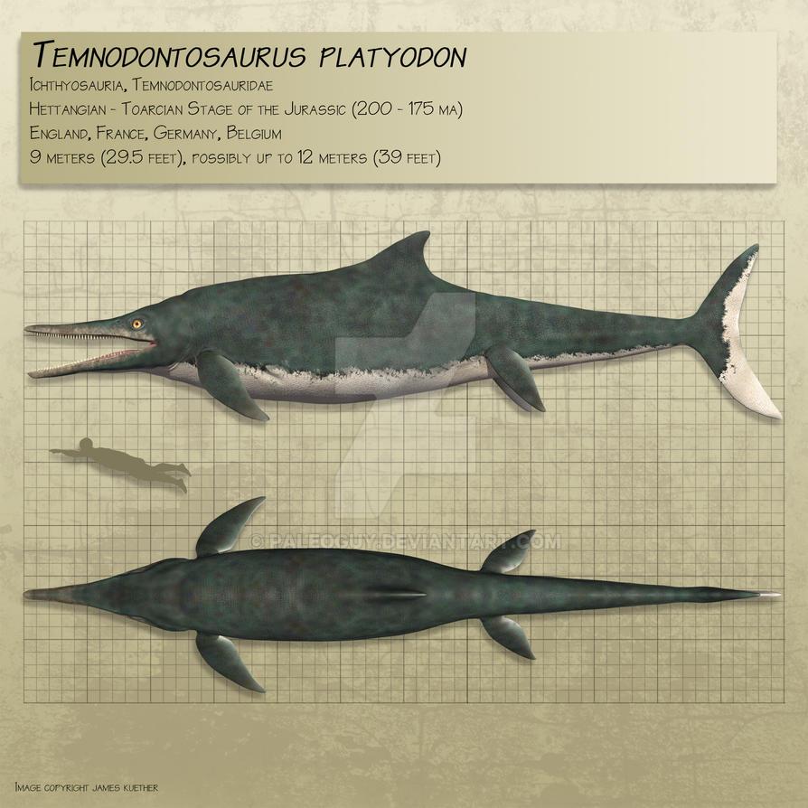 Temnodontosaurus by PaleoGuy on DeviantArt  Temnodontosauru...