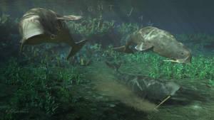 Odobenocetops